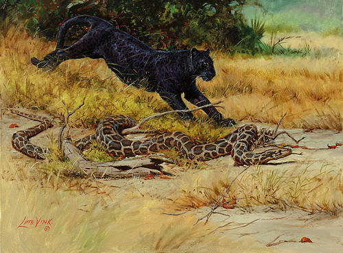 The quick panther-canter