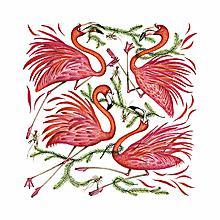 A Flamboyance of Flamingos